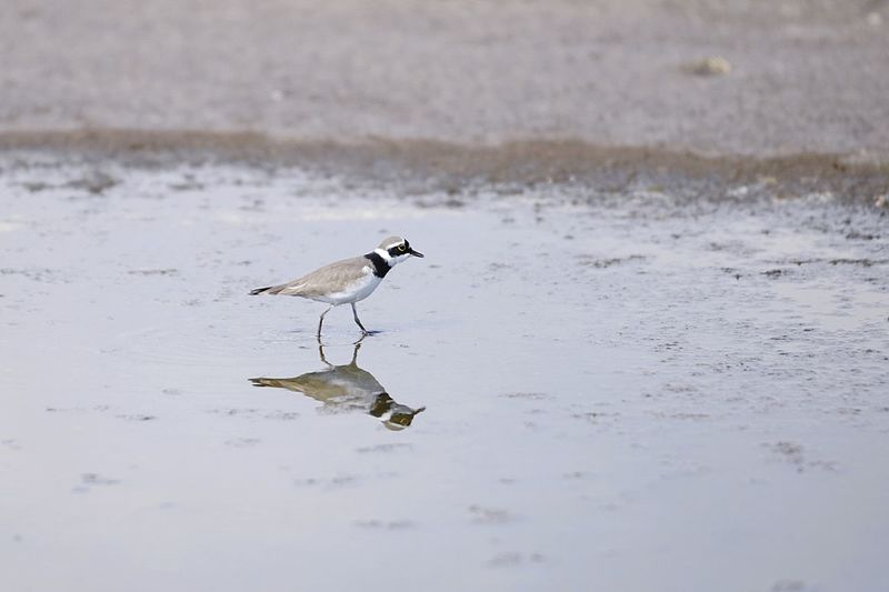 wagtail Nature Nature Photography Wings Sochi Russia Outdoors Wagtail Bird Water Winter Lake Reflection