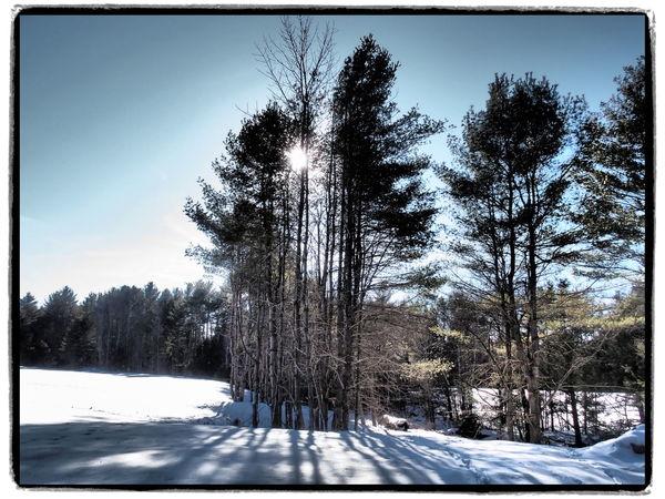 Light through pines Snow Winter Winterwonderland Maine