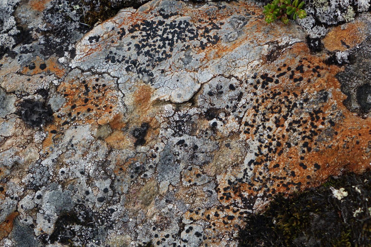 rock - object, rough, no people, nature, close-up, outdoors, day, rock face