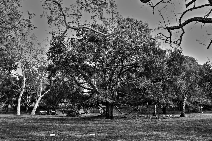 Arboles , Naturaleza Aventura Black And White Photography Blanco Y Negro, Enjoying Life Enjoying The View Fotografia La Mejor Foto Las Mejores <3  Outdoor Outdoor Photography The Week Of Eyeem
