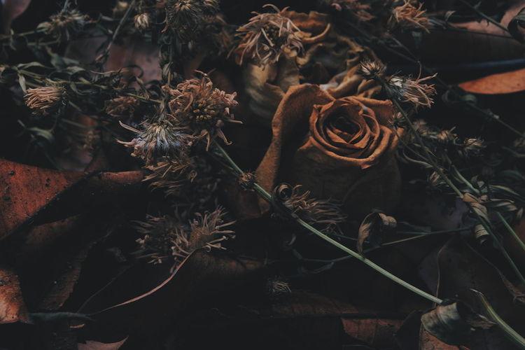 Full Frame Shot Of Dried Plants