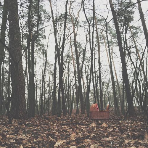IPSSquare Forest Wood Iphoneonly EyeEm Best Shots VSCO IPhoneography Foggy How's The Weather Today? IPS2015Fall