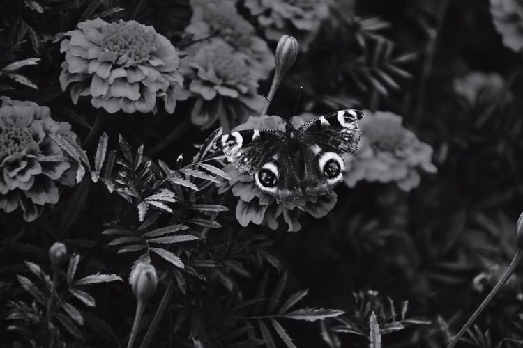 Hello Memories Butterfly Blackandwhite Nikon Nikond5300 The Best  Camera Ever ?