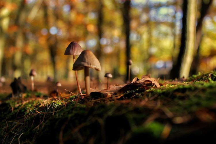 A walk trough the forrest. Mushroom Nature Vegetable Growth Outdoors Close-up Freshness Food Day Blur Bookeh Wood Forrest Wald Pilz Berlin, Germany  A6000 Single Object Low Angle View Grass Animals In The Wild Beauty In Nature Like4like Beauty In Nature No People