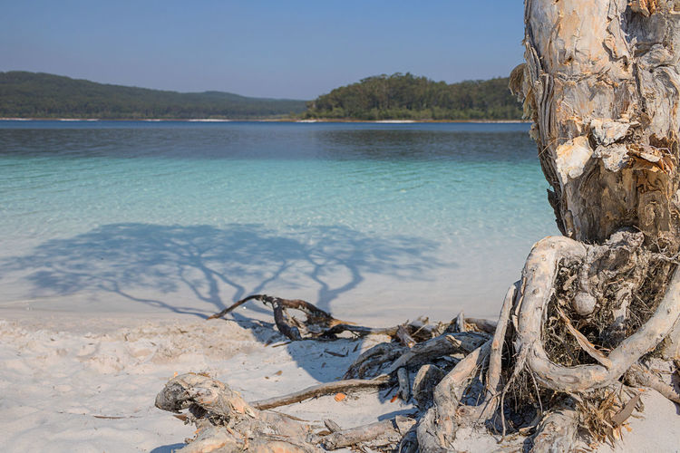Water Beauty In Nature Sky Tranquil Scene Tranquility Sea Nature Land Tree Day Beach Scenics - Nature No People Blue Plant Outdoors Idyllic Driftwood Australia Lake Makenzie Fraiser Island