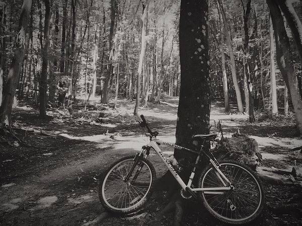 Adventure Club Bicycle Woods Enjoying Life Taking Photos