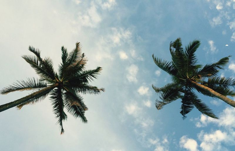 Twins Coconut Tree Nature Low Angle View Palm Tree Tree Sky Nature Growth Tranquility Scenics Tranquil Scene Cloud - Sky Beauty In Nature No People Day Outdoors Palm Frond