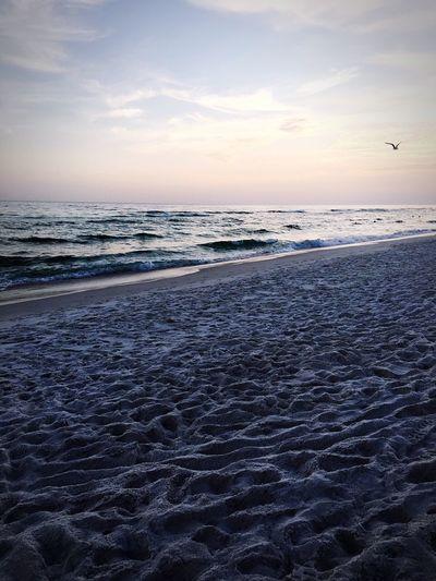 Showcase June The Great Outdoors - 2016 EyeEm Awards Shot By IPhone Ocean View Beach Life Florida Waves Bird Photography Water Sand Beach Beautiful