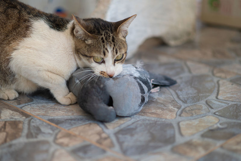 Close-up portrait of a cat resting on tiled floor