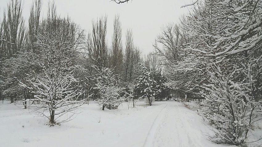 Snow Day ❄ Taraz Snow снег ❤️ Тараз