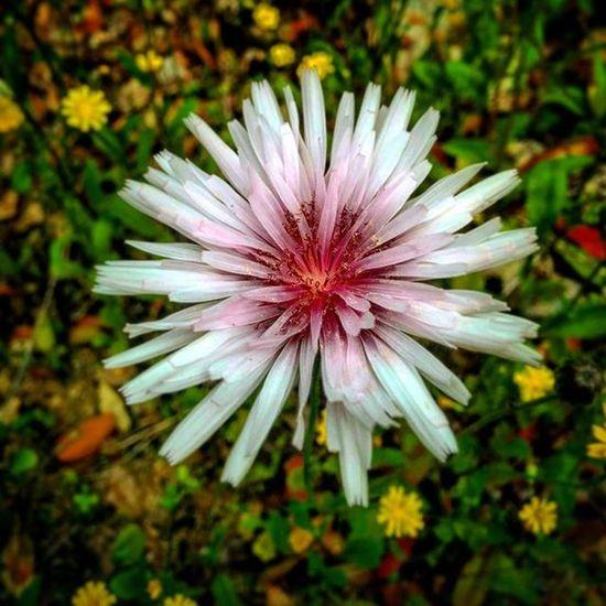 Salento Ortelle Nature Natura Campagna Fiore Fiori Puglia Italia Italy Flower Flowers Primavera Spring