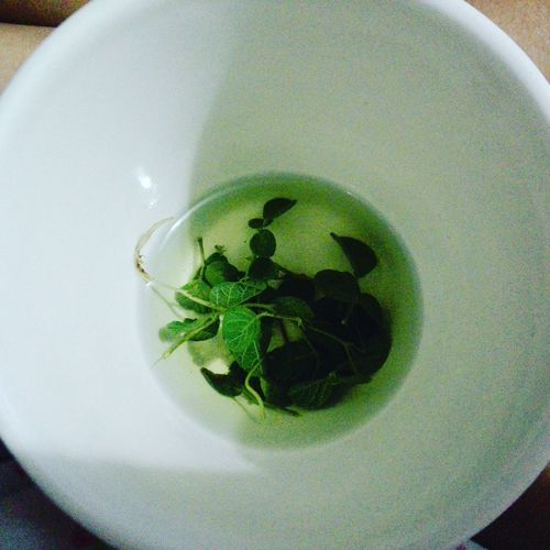 Green Color Take A Break A Cup Of Green Leaves🌿 Tasty Loveit InFusion