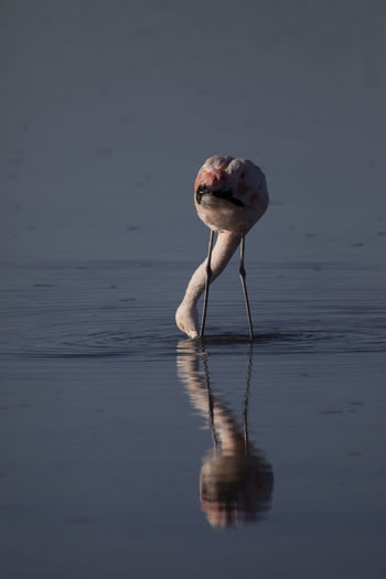 Bird standing in a lake