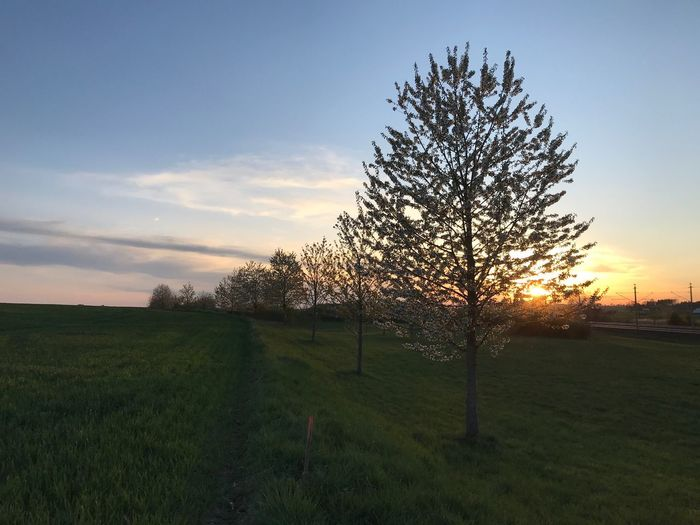 Plant Sky Sunset Field Beauty In Nature Land Growth Tranquility Landscape Cloud - Sky Fence Tranquil Scene Scenics - Nature No People Tree Nature Environment
