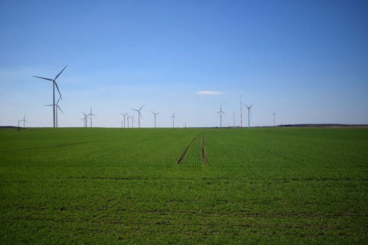 Rural Scene Agriculture Growth In A Row Renewable Energy Technology Alternative Energy Nature Landscape No People Wind Turbine Sky Wind Power Business Finance And Industry Day Outdoors Tree Windturbines Fieldscape Nature Structure Flora
