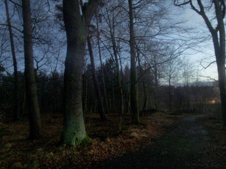 From Daylight To Dusk Twilight Forest Track Strange Light And Shadows Gloomy Atmosphere Tree Nature Growth Tree Trunk Tranquility Outdoors Sky No People Beauty In Nature Bare Tree Forest Day Grass Germany🇩🇪