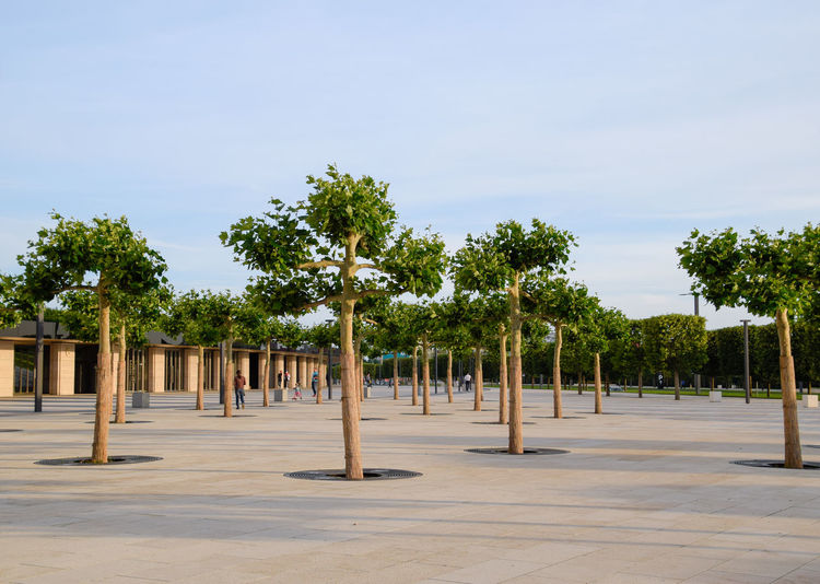 Trees on footpath against sky