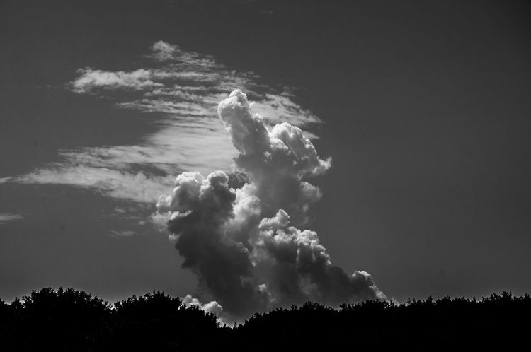 Animal Cloud - Sky EyeEm Gallery Cloud Monochrome Melancholy Darkness And Light EyeEm Atmosphere EyeEm Best Shots Monochrome Photography Sky Black And White Black And White Photography Exceptional Photographs Black & White Outdoors Monocrome Photography Fine Art Photography Black And White Friday