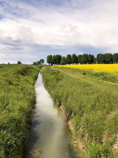 Nature Beauty In Nature Tranquil Scene Sky Scenics Tree Tranquility Cloud - Sky Landscape Green Color Outdoors No People Field Grass Growth Day River Water Rural Scene Canal Irrigation Meadow Flowers Yellow Flower Green Color