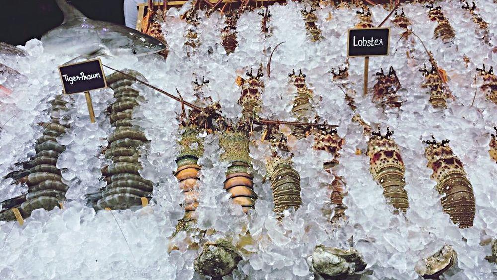 Ice Lobster Tiger Prawn Thailand Koh Samui Seefood Shell Shark Food