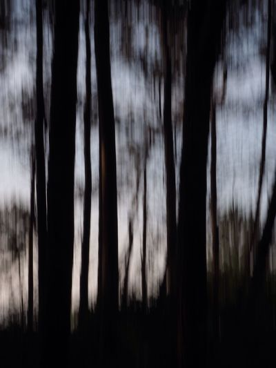 Wald Wischer Forestwalk Nature No People Silhouette Tranquility Tree Night Beauty In Nature Outdoors