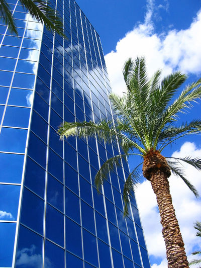 Architecture Blue Building Exterior Built Structure Close-up Cloud - Sky Day Growth Leaf Low Angle View Nature No People Outdoors Palm Tree Sky Tree