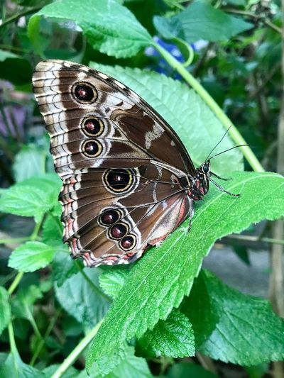 Butterfly Leaf Plant Part Insect Green Color Close-up Invertebrate Animal Wildlife Animal Themes Animals In The Wild Animal Plant Animal Wing One Animal Butterfly - Insect Day Nature No People Beauty In Nature