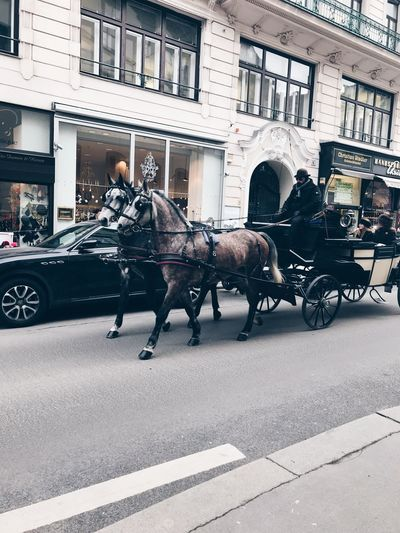Horse Carriage Vienna Horsedrawn Transportation Horse Cart Mode Of Transport Working Animal first eyeem photo EyeEmNewHere