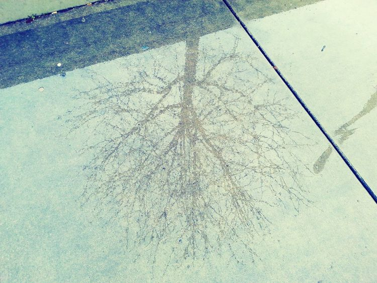 upside down reflection tree High Angle View Shadow Outdoors Sunlight Day Textured  No People Close-up Reflections Tree Rain Reflection Rainy Days☔ Wet Concrete Concrete Structure Concrete Floor City Street Urban Photography Water Reflections EyeEmNewHere Contrast Urban Landscape Nature Sillouette The City Light Art Is Everywhere