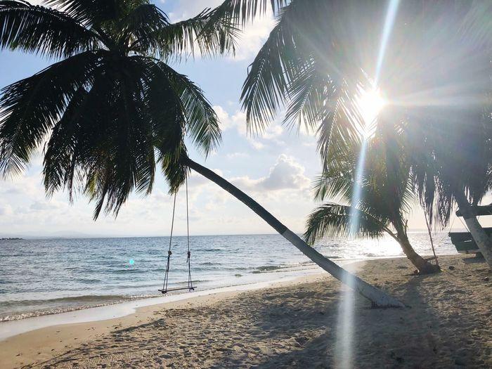 Amazing San Blas islands Tree Sunlight Water Sky Beach Sea Nature Land Day Beauty In Nature Sun Horizon No People This Is Strength
