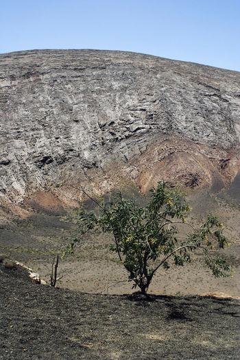 Tree growing on rock against sky