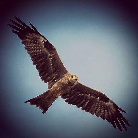 GoldenEagle Eagle Eyes Skyhigh Myblr Bird Feathers Sunny Yelahanka Canon1200d