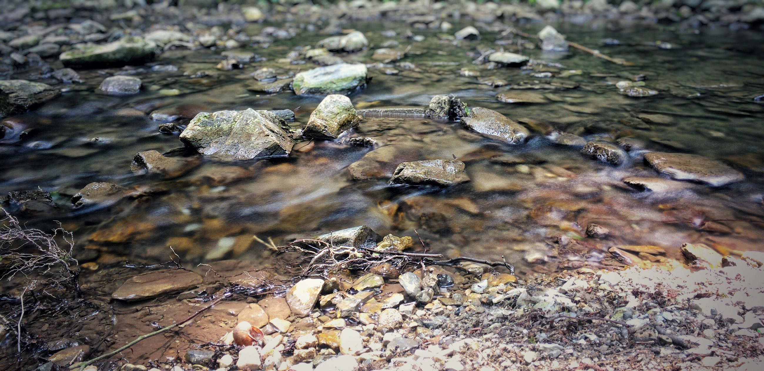 water, nature, high angle view, animal themes, tranquility, animals in the wild, dry, day, wildlife, lake, outdoors, leaf, close-up, no people, beauty in nature, reflection, rock - object, selective focus, ground, beach