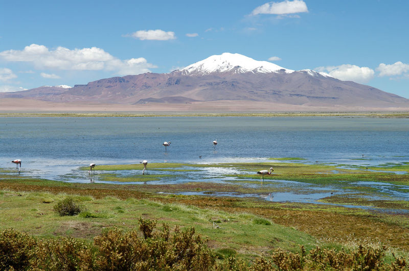 Wonderful salar de tara where pink and andean flamingos can be observed