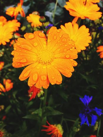 Raindrops Flowers Rainy Day Colors
