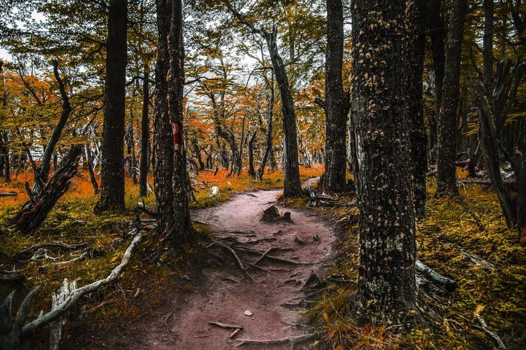 Autumn Beauty In Nature Day Forest Forest Photography Forest Trees Growth Landscape Leaves Nature No People Non-urban Scene Outdoors Scenics Tranquil Scene Tranquility Tree Tree Trunk