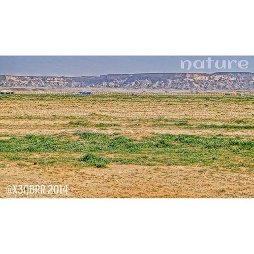روضة_الخفس روضة صورة حريملاء الخفس Spring plant ربيع الربيع nature photo فيديو كشته Landscape تصويري Riyadh لاندسكيب ksa saudi Panoramaa57 photooftheday الرياض مع صديقي @abumashari frind