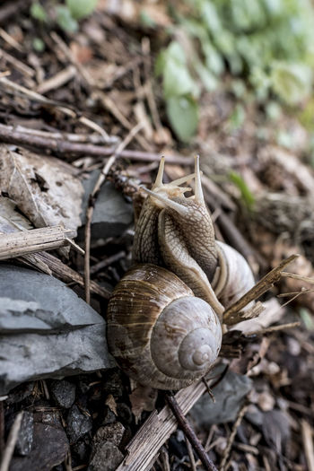 Inner Power Animal Animal Shell Animal Themes Animal Wildlife Animals In The Wild Close-up Day Dry Focus On Foreground Gastropod Invertebrate Leaf Mollusk Nature No People One Animal Outdoors Plant Plant Part Shell Snail