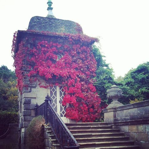 'Red Ivy' PollockHouse Glasgow  Ivy Red Climbers Climbing Vine photography instagram