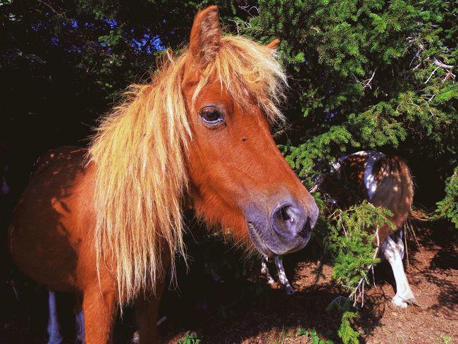 Horse Close-up Animal Themes Grayson Highlands National Park