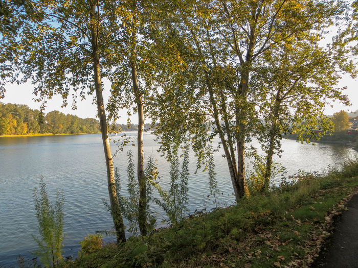 Willamette River near John's Landing Afternoon Autumn EyeEmNewHere Horizontal Nature Tranquility Willamette River  Blue Getaway  Landscape No People Non-urban Scene Outdoors Peaceful Relax River Scenics - Nature Serene Vacation Water