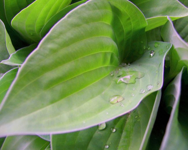 Green Color Leaf Close-up Nature Full Frame Growth No People Plant Outdoors Backgrounds Beauty In Nature Droplet Drops Of Water Droplets Droplets Collection Green Leaves Green Leaf Green Plant Greenleaves Plant Nature Green Background Green Nature Greenery Copy Space