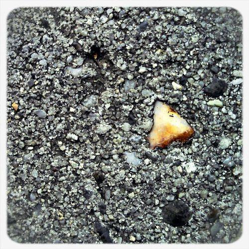 Naturehippys #naturehippys Noticed This Random Yellowstone In A Stepping Stone.  Tnhusa