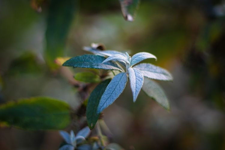 Morning Frost Focus On Foreground Leaf Green Color Nature Close-up Growth Beauty In Nature Day Fragility Outdoors Flower Plant No People Flower Head Freshness