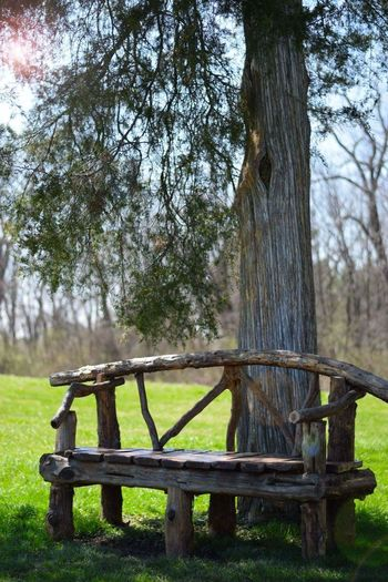 Serenity Perpetual Bliss Bench Tree Nature Outdoors Beauty In Nature Sit And Relax... No People Spring