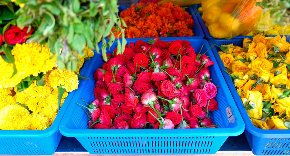 High angle view of red flowering plants in market