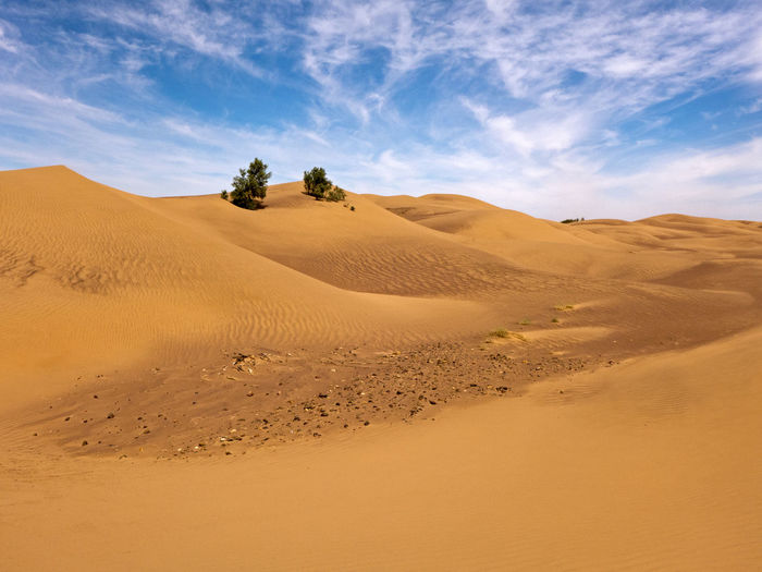 Isolated trees in the Sahara desert in Morocco Sand Scenics - Nature Desert Landscape Land Arid Climate Climate Beauty In Nature Environment Tranquility Sky Tranquil Scene Nature Non-urban Scene Cloud - Sky Semi-arid Morocco Sahara Adventure Extreme Terrain Hot Africa Sand Dune Physical Geography Tree