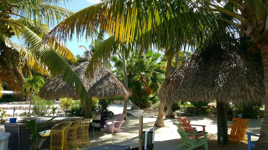 Hammock Swing Tropical Paradise Tiki Bar Tiki Hut Sand & Sea Umbrellas Hot Day Best Life Peace Tropical Life Evening Glow Florida Life Beach Key Largo Houseboat Fun Straw Huts Shelter Shelter Island