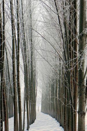 Canon70d Trees Snow ❄ Qiqihar China