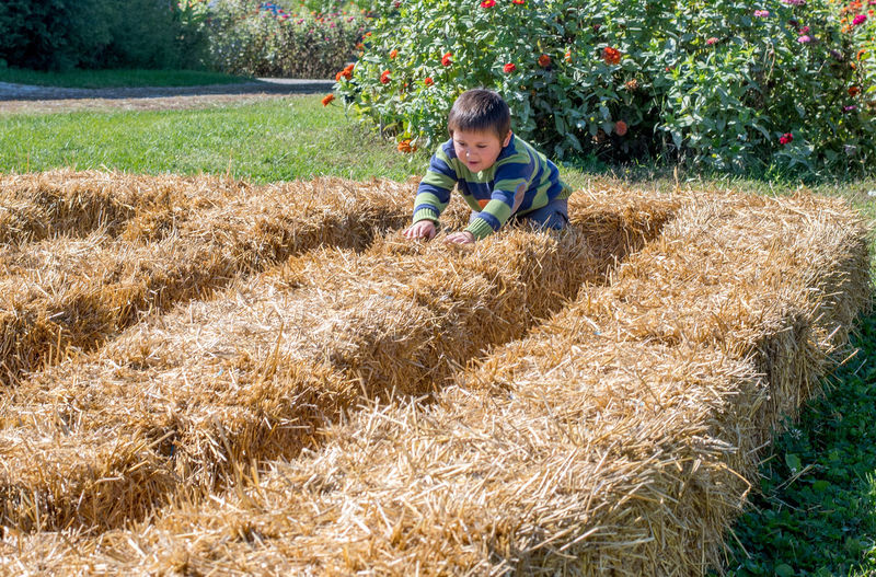 and young boy plays in a maze made of straw bales, a fun event for halloweeen Autumn Maze Nature Active Kids Agriculture Boy Child Childhood Day Fall Farm Field Full Frame Halloweeen Kid Men One Person Outdoors Pattern Portrait Rural Scene Straw Maze For Kids